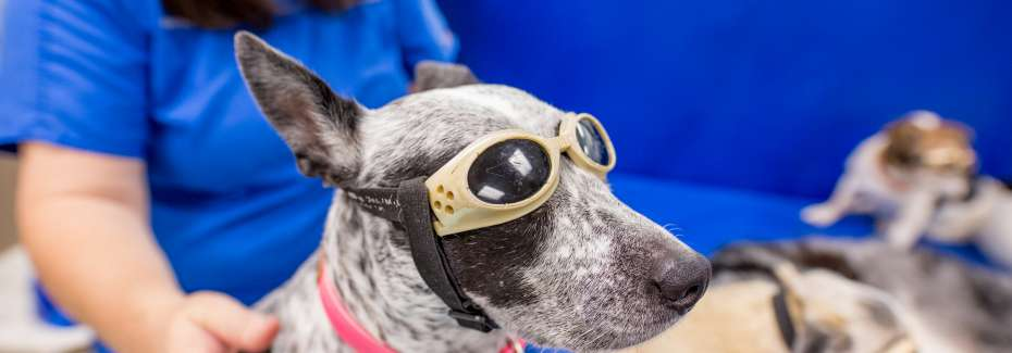 Dogs in integrative medicine