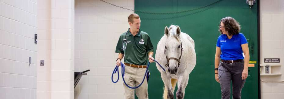 Dr. Sanchez with student in large animal hospital.