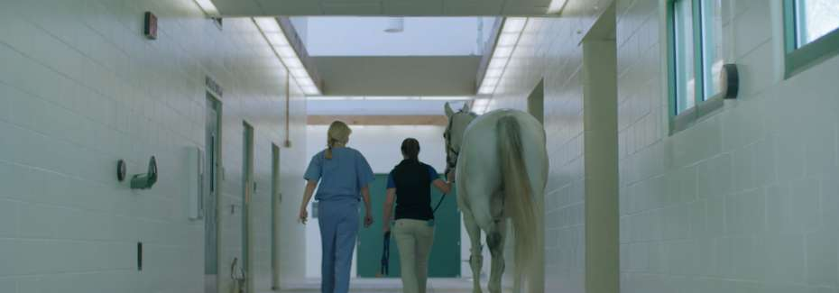Horse in hospital