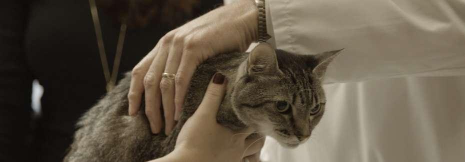Clinician examining cat