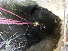 Calf Sinkhole Rescue 2