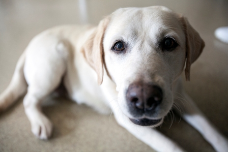 Uf Service Dog Program
