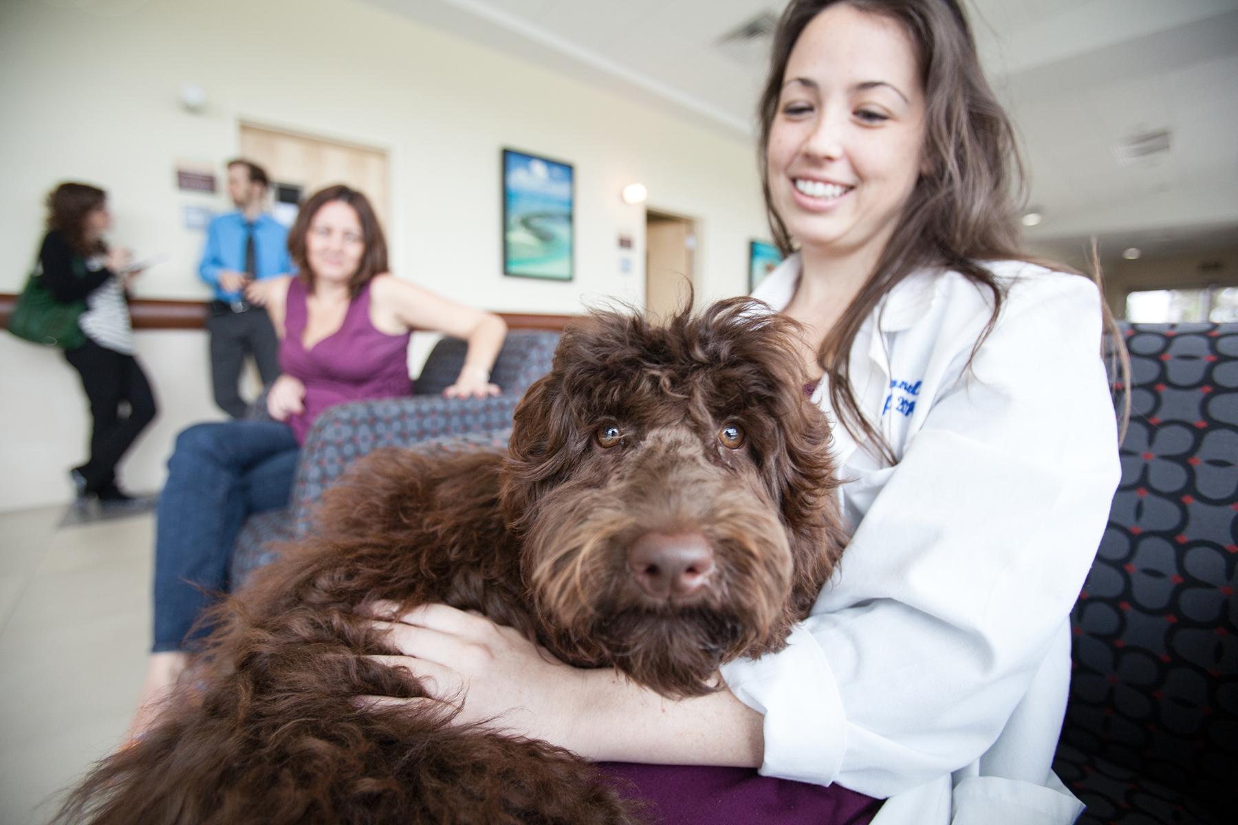 uf veterinarians save dog with tetanus infection  u00bb college