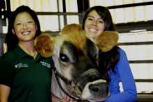 Veterinary student Carley Trcalek and Dr. Myriam Jimenez are shown with Penny prior to her surgery on May 8.