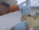Challenge Accepted video turtle shot