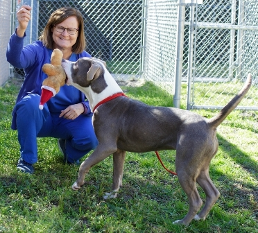 Dr. Julie Levy holds a dog currently up for adoption at the Alachua County Animal Services facility in Gainesville.