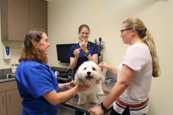 Dr. Jenna Rooks prepares to administer the canine flu vaccine to a dog belonging to a UF veterinary medical student during a clinic held on June 22 at the UF Small Animal Hospital.