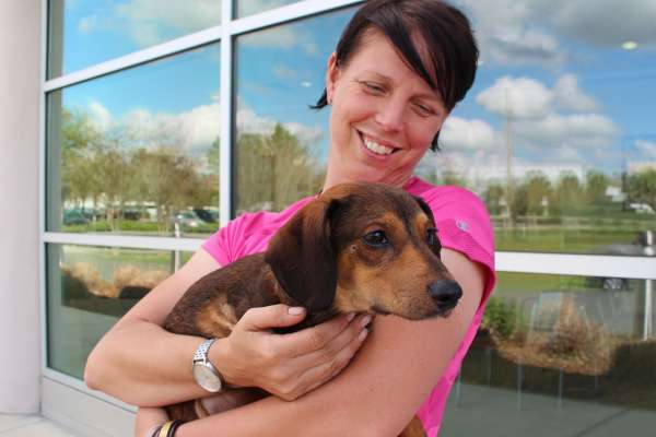Veterinarian with dachshund