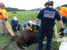 Brandi Phillips of the UF VETS team, center, is shown with other team volunteers preparing to lift this blind mare, who was also pregnant, out of a sinkhole she had fallen into in Trenton.