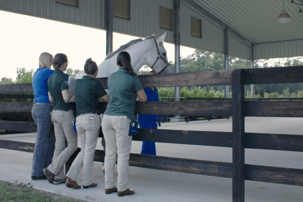 Dr. Ali Morton with students at equine lameness arena.