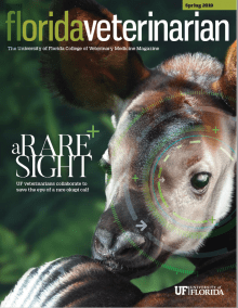 Cover Image Florida Veterinarian Spring 2019