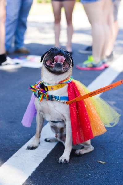 Pride Walk 2019 Dog Picture