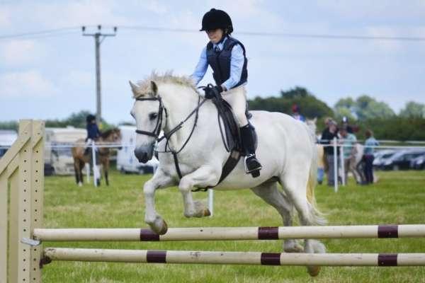 white-horse-965618-min-680x486